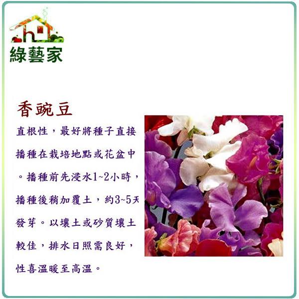 【綠藝家】大包裝H42.香豌豆(混合色)種子15克(約150顆)