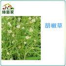 【綠藝家】K17.胡椒草種子100顆...