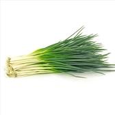 CARMO四季蔥種子 園藝種子(單份) 【FR0073】