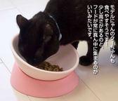 【年終大促】防摔の貓碗斜口碗 任意傾斜寵物碗 保護頸椎防滑狗碗斗牛扁臉食盆