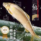 宜蘭帶卵母香魚(6尾) 1kg±10%/盒