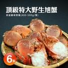 【屏聚美食網】嚴選-特大母旭蟹6隻(400-500g/隻)免運組