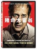 【停看聽音響唱片】【DVD】賭命大富翁
