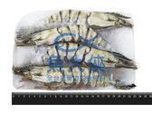 1C4A【魚大俠】SP071野生海草蝦(實重430g/4尾/盒)#藍盒