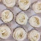 永生花花材,精品戴安玫瑰,2-3公分單朵價格