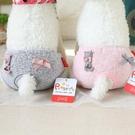 新款寵物生理褲小貓蝴蝶結生理褲寵物衣服狗狗月經褲姨 『洛小仙女鞋』