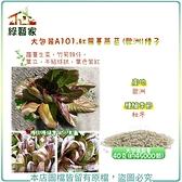 【綠藝家】大包裝A101.紅蘿蔓萵苣(歐洲)種子40克(約45000顆)