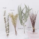 【BlueCat】天然植物尤加利葉樹枝拍照道具