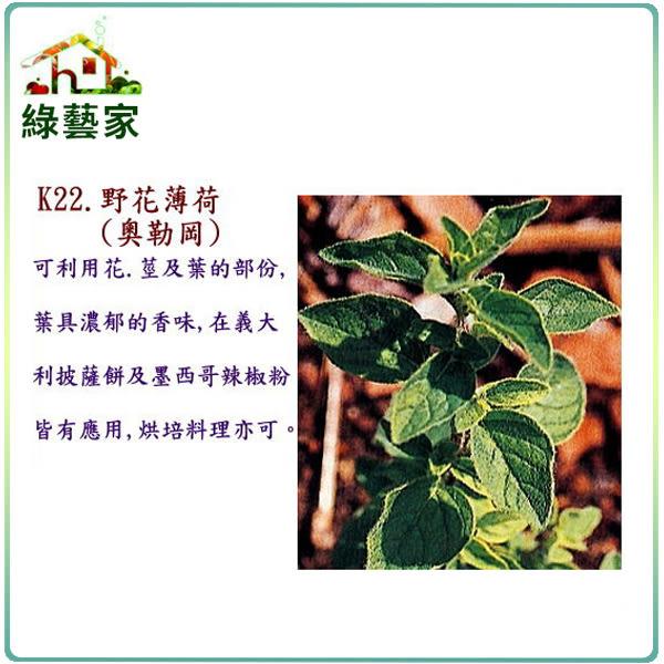 【綠藝家】大包裝K22.野花薄荷種子(奧勒岡)3500顆