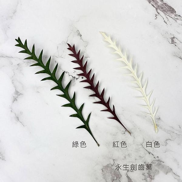 進口永生劍齒葉-乾燥花圈 乾燥花束 不凋花配草 拍照道具 室內擺飾 乾燥花材-10-15CM/1葉