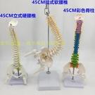 45CM人體脊柱模型 醫學正骨練習骨骼模型頸椎腰椎脊椎骨架模型
