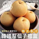 【果之蔬-全省免運】韓國梨仙子X1箱(7-8顆/箱 每箱約5kg±10%含箱重)