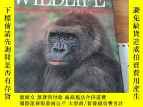 二手書博民逛書店VANISHING罕見WILDLIFE ENDANGERED SPECIES OF THE WORLDY153
