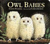 Owl Babies 貓頭鷹寶寶 硬頁書