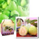 阿蓮芭樂禮盒10台斤(15-20粒)