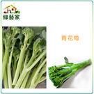 【綠藝家】B07.青花筍種子12顆...