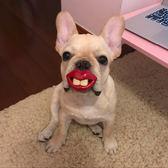 【Miss.Sugar】寵物狗狗搞怪奶嘴 大紅嘴唇 搞笑安撫奶嘴 款式不足隨機出貨【G00476】
