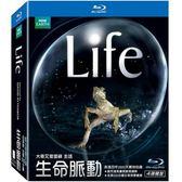 生命脈動 藍光BD 4碟精裝版 (音樂影片購)