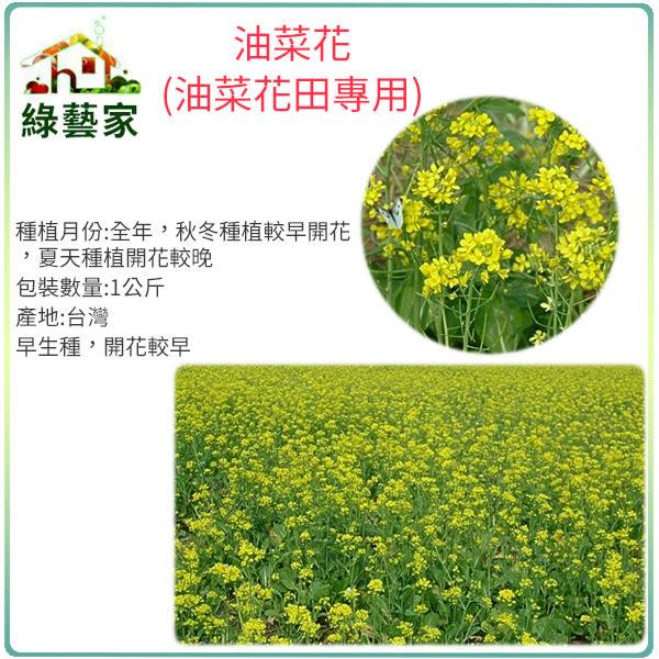 【綠藝家00A16-2】油菜花種子(油菜花田專用)1公斤