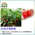 【綠藝家】G71.紅色子彈辣椒種子5顆