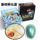 超可愛動物水孵化膨脹蛋 魔術蛋 七種動物可選 【省錢博士】