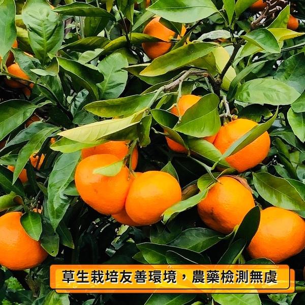【愛不囉嗦】橘二代 茂谷柑鮮果禮盒 - 免運 ( 5斤裝 )
