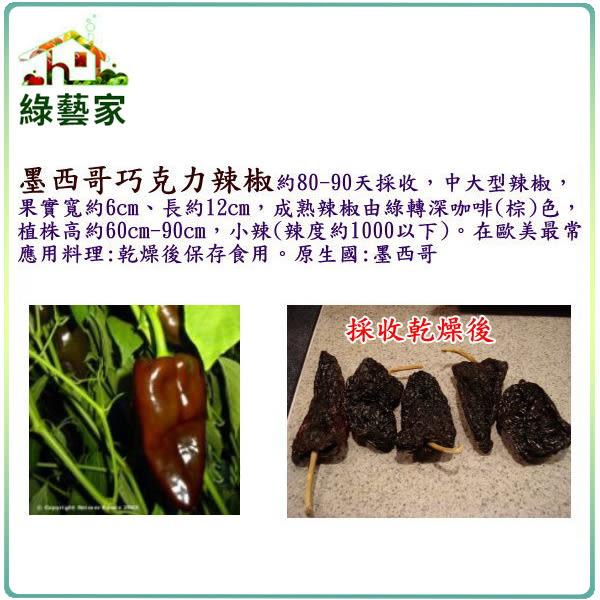 【綠藝家】大包裝G68.墨西哥巧克力辣椒種子60顆