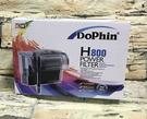 【西高地水族坊】】Dophin 海豚 外...