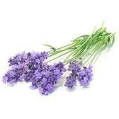Visakha - 真正薰衣草 Lavender  單方精油 (10ml)