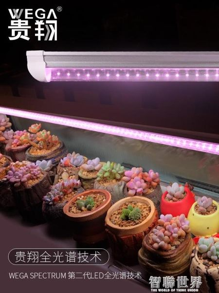 補光燈 貴翔 多肉補光燈上色全光譜LED蘭花卉育苗食蟲草仿太陽植物生長燈 智聯