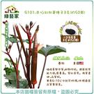 【綠藝家】G101.赤焰紅秋葵種子3克(...