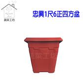 忠興1尺6正四方盆磚紅色