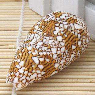 貝殼海螺 魚缸水族 裝飾家居擺設 收藏工藝品織錦芋螺5-8CM 7個價
