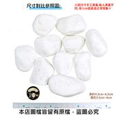 極白石 1吋 20公斤±5%裝 (漢白玉.特白石.鵝卵石.白卵石)
