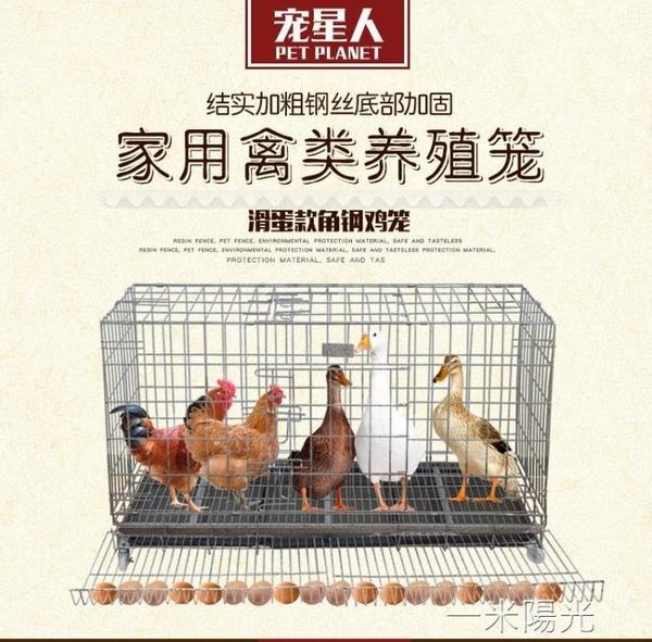 雞籠子養殖籠雞籠家用養殖籠雞舍家用大號特大號滾蛋養雞籠寵星人  一米陽光