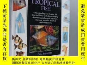 二手書博民逛書店Understanding罕見Tropical Fish 美國原