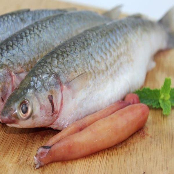 【綠安生活】生鮮豆仔魚(450g)