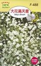 [大花滿天星種子] 各式觀賞花卉種子 香...