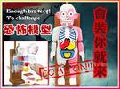 人體模型 人體器官