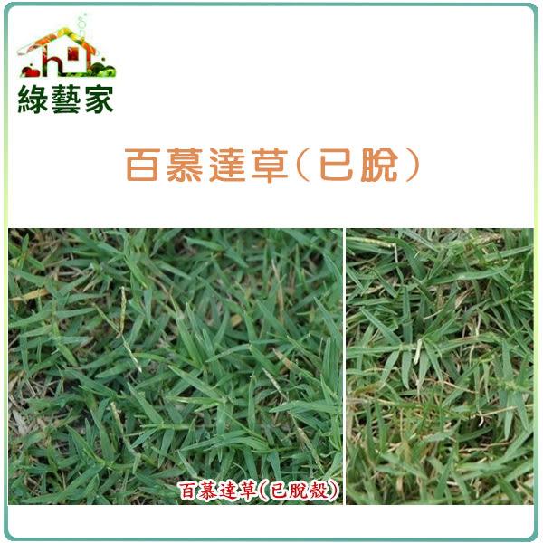 【綠藝家】百慕達草種子(已脫殼)1公斤裝