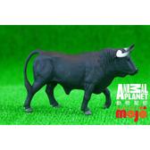【Mojo Fun 動物星球】野生動物-西班牙公牛 387224