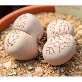 ⓒ網紋凌耀玉種子 (10顆裝) 多肉植物/生石花種子【A44】
