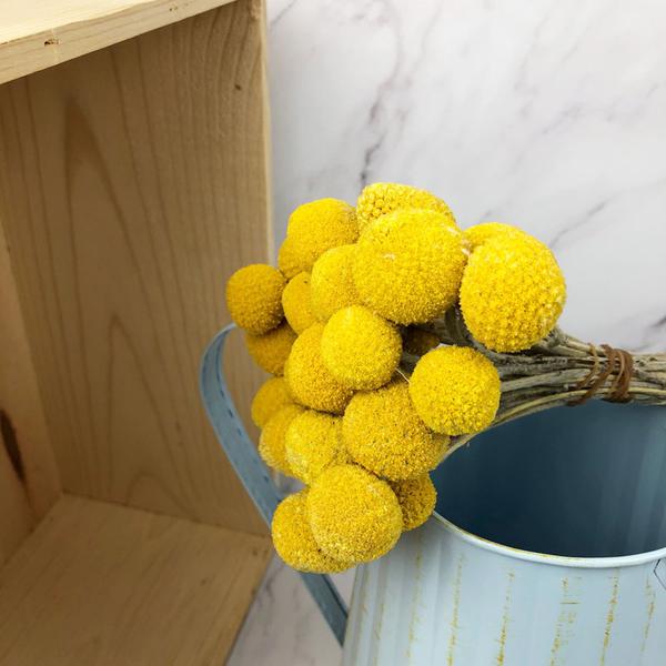 進口乾燥天然黃金球-乾燥花圈 乾燥花束 拍照道具 手作素材 室內擺飾 乾燥花材 鄉村風-18元/支