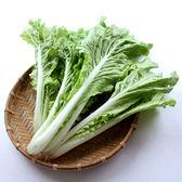(✿◠‿◠)促銷品~任選六樣$399免運活動區專用★【日燦】有機小白菜