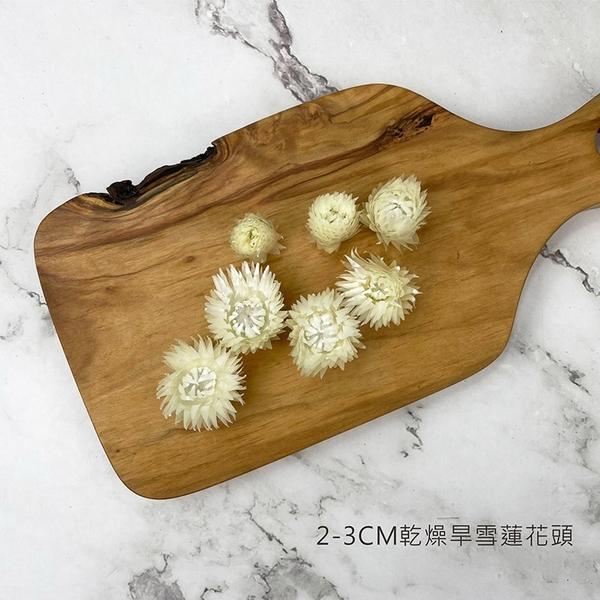 2-3CM 進口乾燥旱雪蓮花頭-乾燥花圈 乾燥花束 浮游花 拍照道具 室內擺飾 乾燥花材