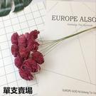 進口日本大地農園,通通草、索拉花,永生花花材,直徑約3-4cm,單朵價格