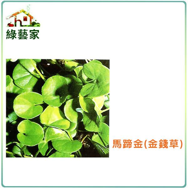 【綠藝家】大包裝M08.馬蹄金種子50克