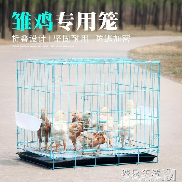 雛雞籠子家用小號鵪鶉鴿子養殖籠摺疊育雛籠小雞籠加密雞籠子雞舍