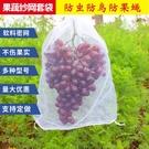 葡萄防蟲防鳥套袋水果套網防果蠅透風透光枇杷果樹網套白色紗網袋 快速出貨