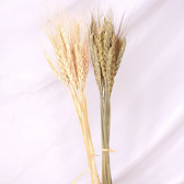 【BlueCat】天然乾燥 米色小麥 乾燥花 拍攝道具 拍照背景 花材